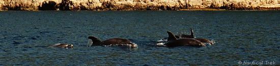 La thalassothérapie des dauphins